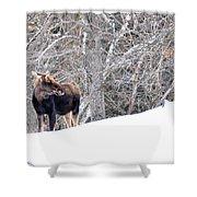 Hello Moose Shower Curtain