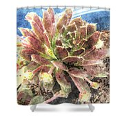 Hen And Chicks Plant Shower Curtain