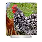 Hens Shower Curtain