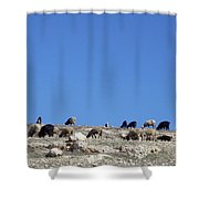 Herd In The Atlas Mountains 02 Shower Curtain