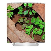 Here Comes Spring Shower Curtain