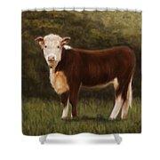 Hereford Heifer Shower Curtain