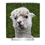 Here's Lookin' At You Kid Shower Curtain