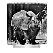 Heres Lookin At You  Kid Indian Rhino  Shower Curtain