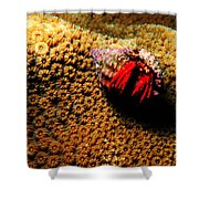 Hermit Crab On Coral Shower Curtain