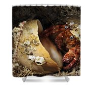 Hermit Crab Tucked Away Shower Curtain