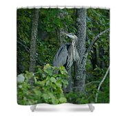 Heron On A Limb Shower Curtain