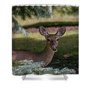 Hi Deer Shower Curtain