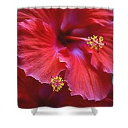 Hibiscus Duo Shower Curtain