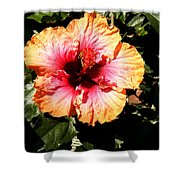Hibiscus Flower Shower Curtain by Lisa Phillips