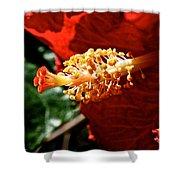 Hibiscus Highlight Shower Curtain