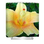 Hibiscus Hip Shower Curtain