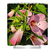 Hibiscus In Summer Shower Curtain