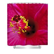 Hibiscus Macro Shower Curtain by Joe Carini - Printscapes