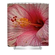 Hibiscus Pink Shower Curtain