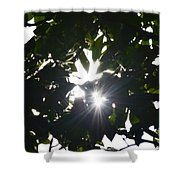 Hickory Triple Stars Shower Curtain