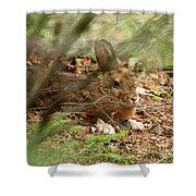 Hidden Hare Shower Curtain