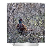 Hiding Pheasant Shower Curtain