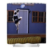 High Flying Catch Shower Curtain