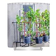 High Line Print 28 Shower Curtain