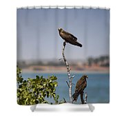 Higher Up The Tree Shower Curtain