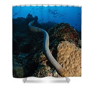Highly Venomous Olive Sea Snake Shower Curtain