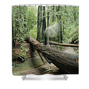 Hiker Moving Over A Fallen Redwood Tree Shower Curtain