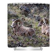 Hillside Rams Shower Curtain