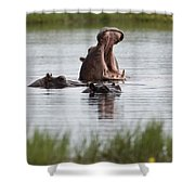 Hippo In Water Exhibits Aggresive Shower Curtain