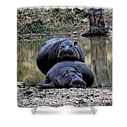 Hippos In Love Shower Curtain