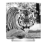 His Majesty Shower Curtain by Scott Pellegrin