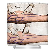 Historical Illustration Of Blood Vessels Shower Curtain