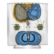 Historical Illustration Of Honey Bee Eye Shower Curtain