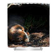Hit The Otter Snooze Shower Curtain