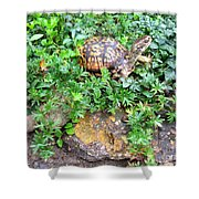 Hitchin A Ride On A Turtle  Shower Curtain