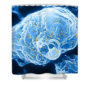 Hiv-1 Infected T4 Lymphocyte Sem Shower Curtain by Science Source
