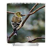 Ho Hum Bird In An Ice Storm Shower Curtain
