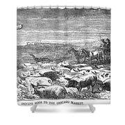 Hog Driving, 1868 Shower Curtain