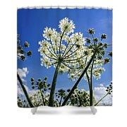 Hogweed  Shower Curtain