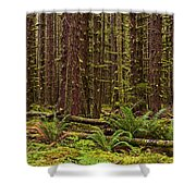 Hoh Rainforest Shower Curtain
