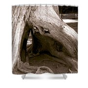 Hollow Tree Shower Curtain