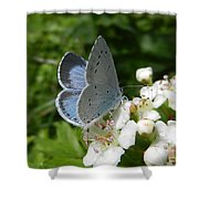 Holly Blue Shower Curtain