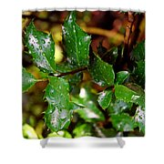 Holly Daze Dew Drops Shower Curtain