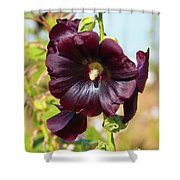 Hollyhock 7193 Shower Curtain