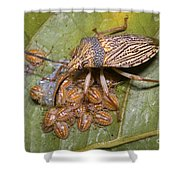 Homopteran Insect Shower Curtain
