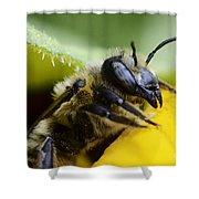 Honey Bee 2 Shower Curtain