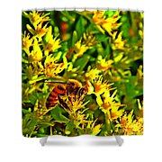 Honey Bee And Sedum  Shower Curtain