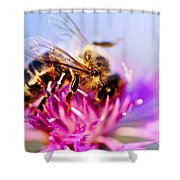 Honey Bee  Shower Curtain by Elena Elisseeva