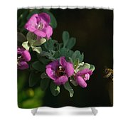 Honey Bees On Sage 2 Shower Curtain