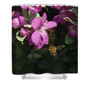 Honey Bees On Sage 3 Shower Curtain